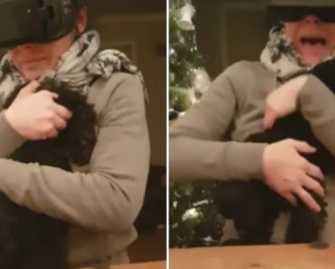 Mother Picks Up Wrong End Of Dog While Playing VR Game 8