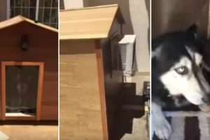 Dog Stays Inside Air Conditioned Dog House 12