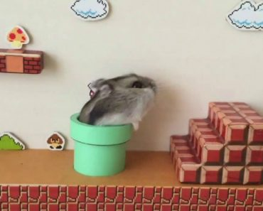'Super Mario Bros.' Themed Hamster Obstacle Course 9