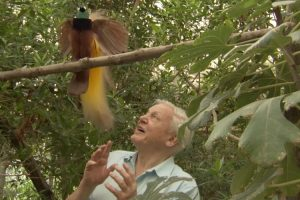 A Beautiful But Insolent Bird Refuses To Let Sir David Attenborough Get A Word In Edgewise 12