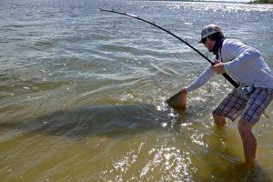 Fisherman Hooks Endangered 17ft Gigantic Sawfish 10