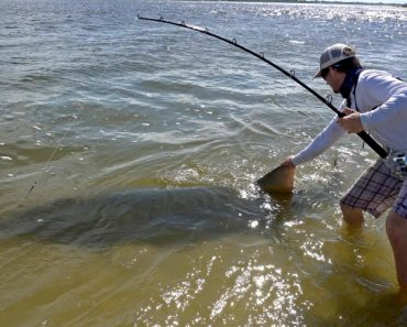Fisherman Hooks Endangered 17ft Gigantic Sawfish 1