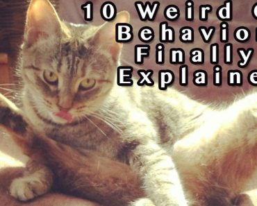 10 Weird Cat Behaviors Explained 8
