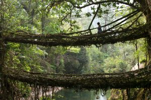 "The Valley Where Bridges Breathe - ""Growing"" Bridges From Living Trees 12"