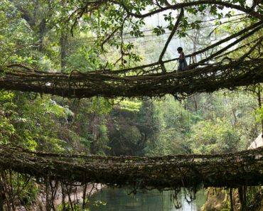 "The Valley Where Bridges Breathe - ""Growing"" Bridges From Living Trees 6"