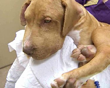 Puppy Recovers After Being Stung Over 400 Times By A Swarm Of Bees 2