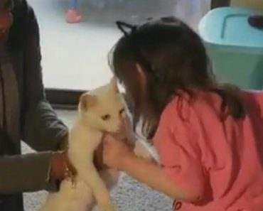 Blind 4-Year-Old with Cancer Reunites with Her Missing Cat 9