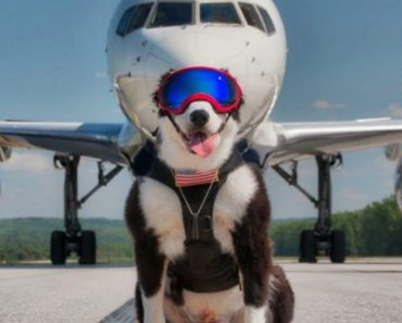Hardworking Dog Gleefully Clears Birds From Airport Runways In Order To Prevent Aircraft Bird Strikes 7
