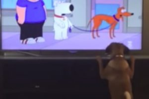 This Pup Can Recognize The Difference Between Dogs And Humans On TV 11