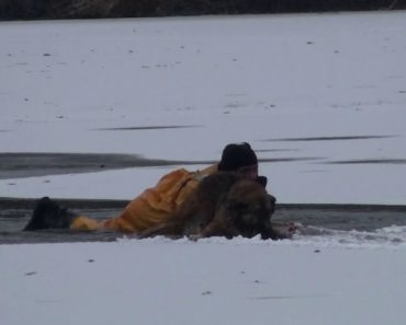 Firefighters Heroically Rescue Dog And His Owner Who Went To Save Him After Falling Through The Ice 3