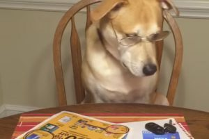 Dog Helps With Back-To-School Shopping 9
