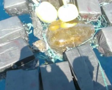 Coast Guard Finds Endangered Sea Turtle Trapped in $53 Million Dollars of Cocaine 2
