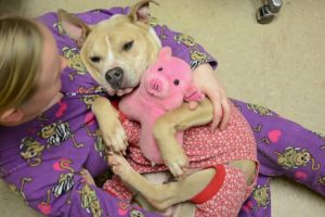 This Animal Shelter Is Encouraging Adoptions With Puppy Pajama Parties 11