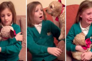 When Her Parents Replace Her Stuffed Animal With A Puppy, This Girl Loses It 10