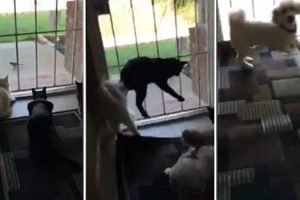 Dog Scares Cats While They Are Locked Into Bird Outside 10