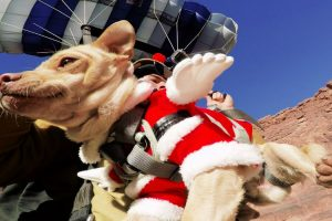 Rescued Dog Loves New Life Of Adventure 11