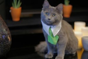 What If Cats Could Buy And Sell Real Estate 11