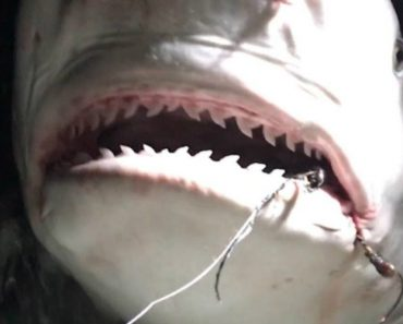 Boat Captain Pulls Rusty Hook From Mouth of 7-Foot-Long Shark 4