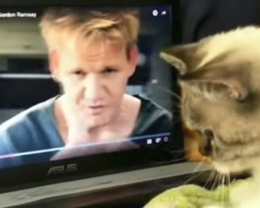Gordon Ramsay Teaches Cat To Knead Dough 2