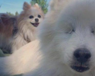 Blind Dog Has His Own Seeing-Eye Dog 3