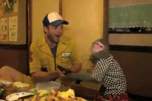 Australian Comedians Go To A Japanese Restaurant With Monkey Servers 12