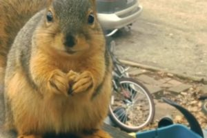 Ramon The Fast Talking Squirrel Thanks Human For Snack 10