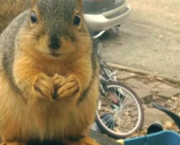 Ramon The Fast Talking Squirrel Thanks Human For Snack 1