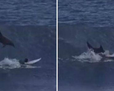 Dolphin Jumping Out Of The Waves And Smash Through A Surfboard 8
