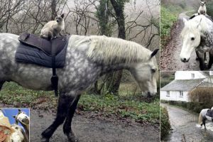 Meet The Cat That Gets Around By Riding On Horseback 11