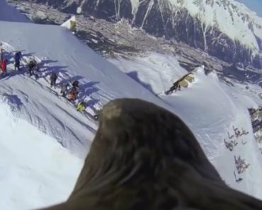 Get A Real Bird's-Eye View Of The Swiss Alps With This Footage Captured By An Eagle 1