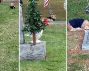 Heartbreaking Moment Of Dog Refusing To Leave Owner's Grave 6
