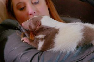 Exotic Animals Are Stealing Pet Lovers' Hearts 10