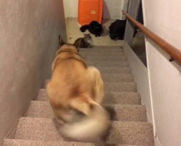 Cool Dog Climbs The Stairs Backwards 8