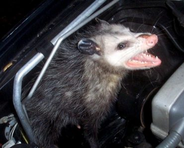 Are There Creatures Living in Your Car You Don't Know About? 8