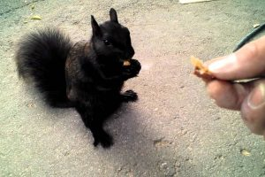 Man Has Close Encounter With Cute Black Squirrel 10