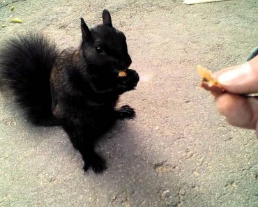 Man Has Close Encounter With Cute Black Squirrel 9