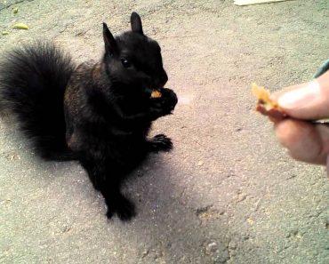 Man Has Close Encounter With Cute Black Squirrel 3