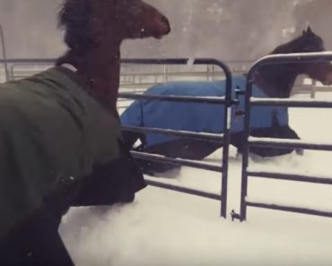 Horses Regret Going Outside In The Snow 9