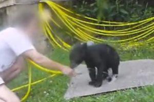 Energetic Bear Cub Plays Slip 'N' Slide As It Gets A Hose Down 11