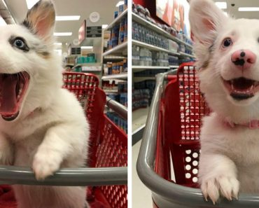 Dog Goes To Target, Has The Best Time Of Her Life 8