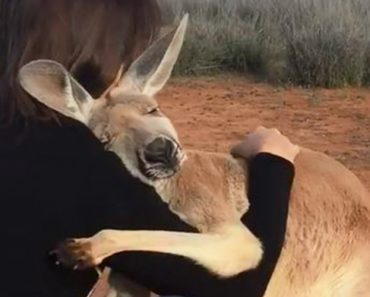 This Rescued Kangaroo Starts Every Day With A Big Hug 2