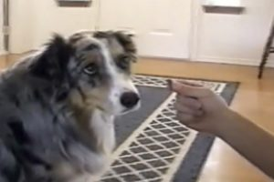 Smart Dog Refuses To Take Treats From The Dog Catcher 11