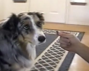 Smart Dog Refuses To Take Treats From The Dog Catcher 9