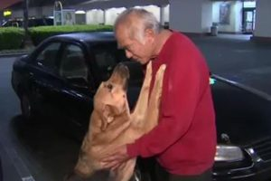 Man Whose Car Was Stolen With Dog Inside Was Thrilled to Get His Pet Back 11