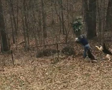 Owner Tries To Get Rid Of Christmas Tree Despite Dogs Protest 9