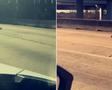Remote-Controlled Car Speeds Down Busy Freeway 2