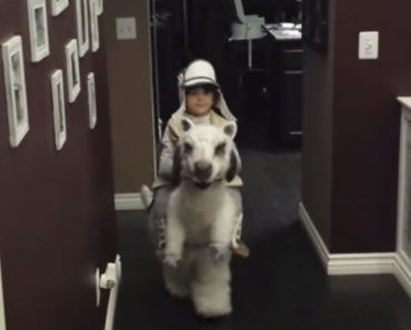 Little Boy Shows Off His Adorable 'Star Wars' Tauntaun Costume 8