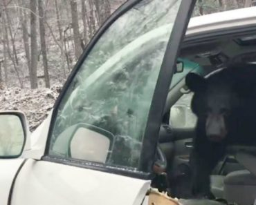 Group Works To Free Baby Bear Stuck In Car As Mama Watches 4