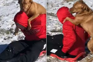 Dog Joins Owner For A Sled Trip Down Snowy Hill 11