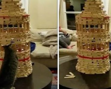 Curious Cat Takes Down A Block Tower One Paw At A Time 2